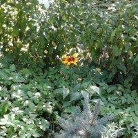 Ёлка и цветок :: Дмитрий Никитин