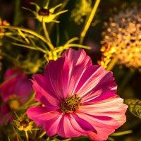 Полевые цветы :: Светлана Щербакова