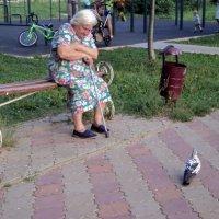 Бабушка и голубь. :: Ольга Кривых