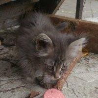 Бездомные животные! :: Оксана Романова