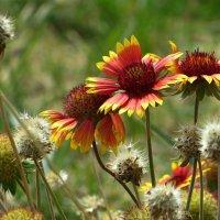 Цветы и семена :: Татьяна Смоляниченко