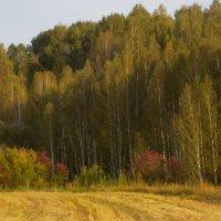 Сентябрьский пейзаж :: Ольга