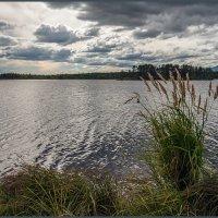 Над землей бушуют травы, облака плывут, как павы :: Сергей l