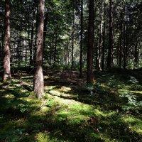 В лесу ... :: Владимир Икомацких