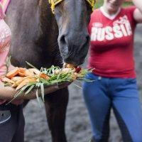 Угощение :: Олеся Колитченко