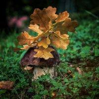 Осень в парке. :: Lidija Abeltinja