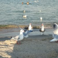 Чайки :: Galina