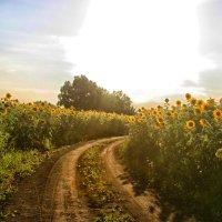 Бабье лето в разгаре :: Любовь Потравных