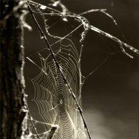 Паучок паутинку плетет, отмечая за годом год :: Olenka