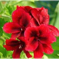 Цветок любви :: Veselina *