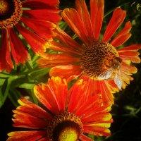 Яркое начало осени :: Lilek Pogorelova