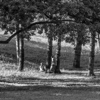Свидание в парке. :: Павел Лушниченко