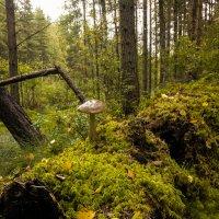 Лес :: Денис Матвеев
