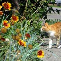 Гуляющий кот :: Татьяна Смоляниченко