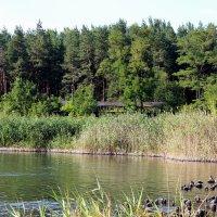 Озеро :: Татьяна Пальчикова