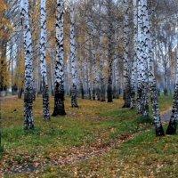 осень :: Горкун Ольга Николаевна