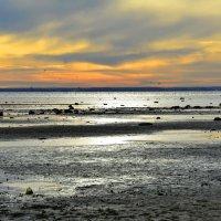 Вечер на заливе :: Николай Танаев