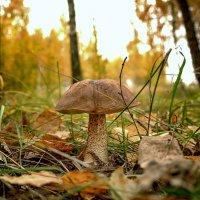 ... на авансцене любимец публики грибного сезона !!! :: Александр Бойко