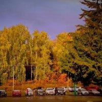 Осень золотит . :: Мила Бовкун