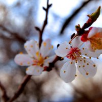 Фото цветов на фоне неба :: Наталья (ShadeNataly) Мельник