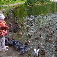 Дети и птицы. :: Наталья
