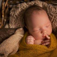 Newborn. :: Алина Кравченко