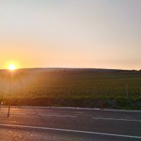 Закат над виноградником :: Евгений