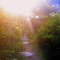 Тропинка к солнцу :: Марина Домосилецкая