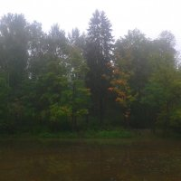 Туман на Кузьминке :: Сапсан