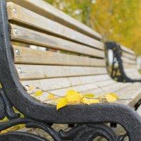 осень в парке :: Ольга Русакова