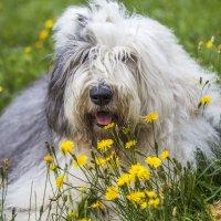Манечка в цветочках :: Лариса Батурова