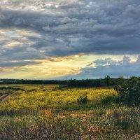Русское поле :: Денис Козьяков