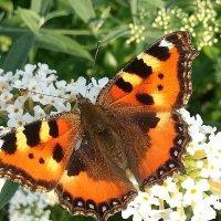 Последние бабочки уходящего тепла... :: Наталья Владимировна