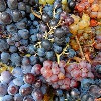 Виноград на вино :: Владимир