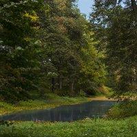 Ясная поляна. Нижний пруд. :: Инна Щелокова