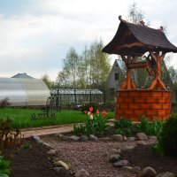 Сад мечты :: Светлана Ларионова