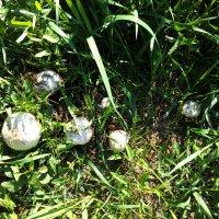 Семейство грибов :: Татьяна Королёва