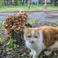 А у нас во дворе. :: Sergey Serebrykov