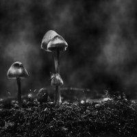 НОЧЬ - время роста грибов .... :: Va-Dim ...