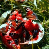 Завтрак у прекрасных бабочек :: Любовь Потравных