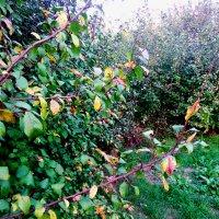 Осень. Листья. :: Татьяна Королёва
