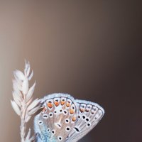 Бабочка колечко. :: Лилия .