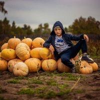 Собираем урожай.. :: Светлана