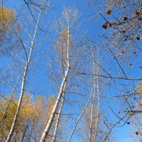 Осень за Обью :: Elena Sartakova