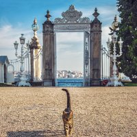 Ворота дворца Долмабахче с видом на Босфор :: Ирина Лепнёва