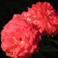 Цветы, цветы... :: Вячеслав Медведев