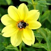 Будет солнечный мёд :: Наталья Жукова
