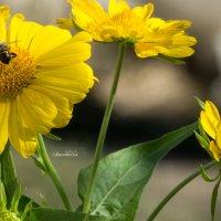Пчелка на цветке :: Анастасия сосновская