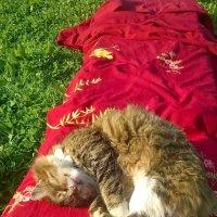 Я на солнышке лежу!!! :: Олег Семенцов