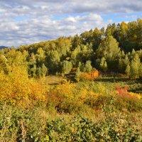 Осенний день :: galina tihonova